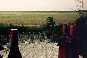 Wijn-spijswandeling